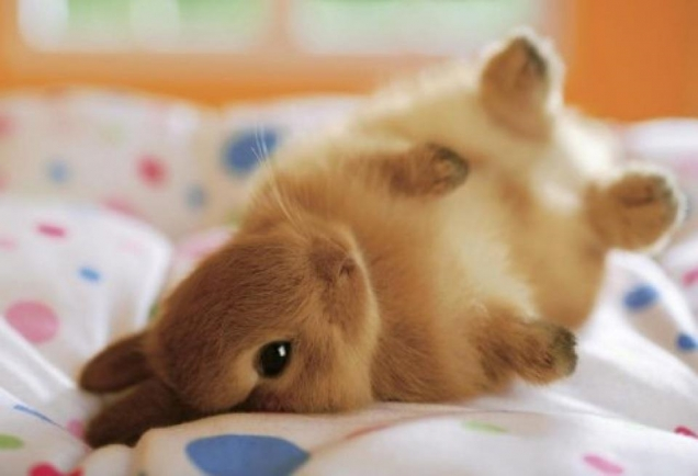 bunny-on-a-bed