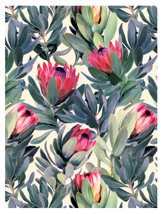 Protea print by Micklyn