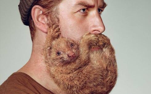 man with animal beard schick